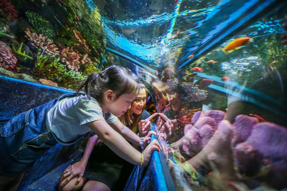 Learning And Having Fun With Sea Creature In Ocean World
